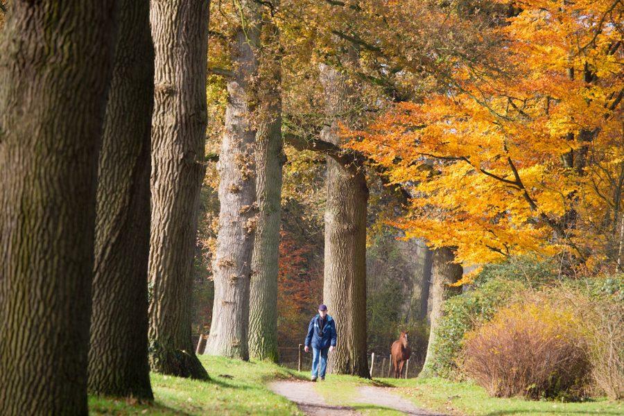 Vechtdal Overijssel, wandelaar in Eerde