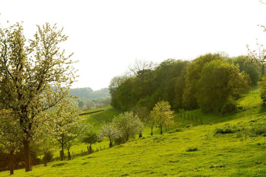 Heuvelland Limburg