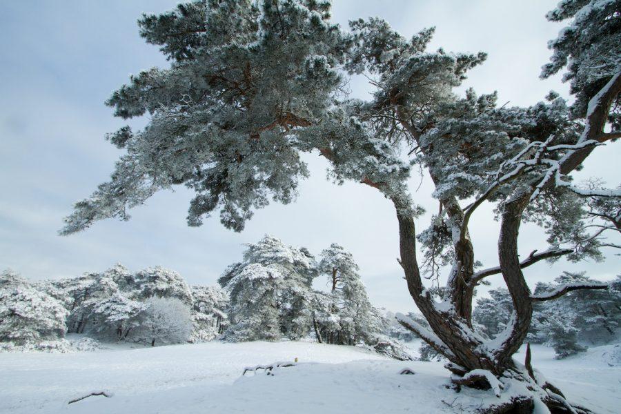 Sneeuw in Vechtdal Overijssel, Ommen